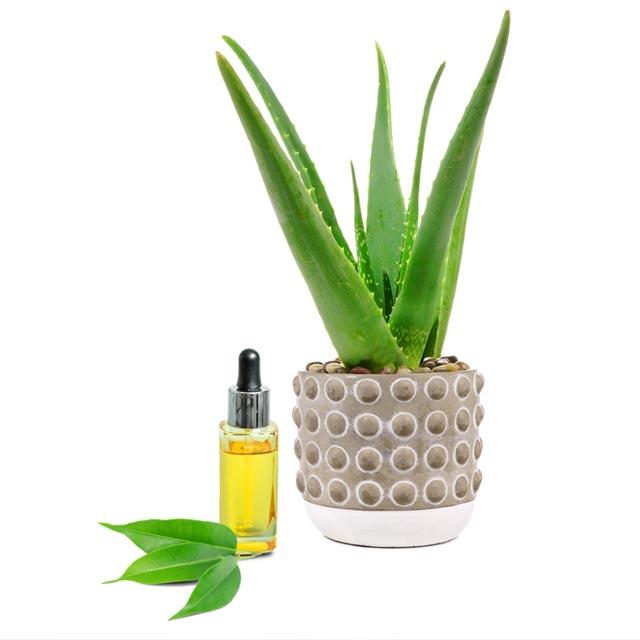 Zehn-X Aloe and Tea Tree